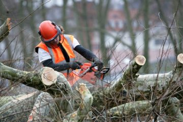 Ścinanie i usuwanie drzew